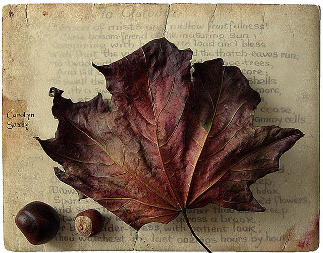Autumn Angel - Original Poem (2/2)