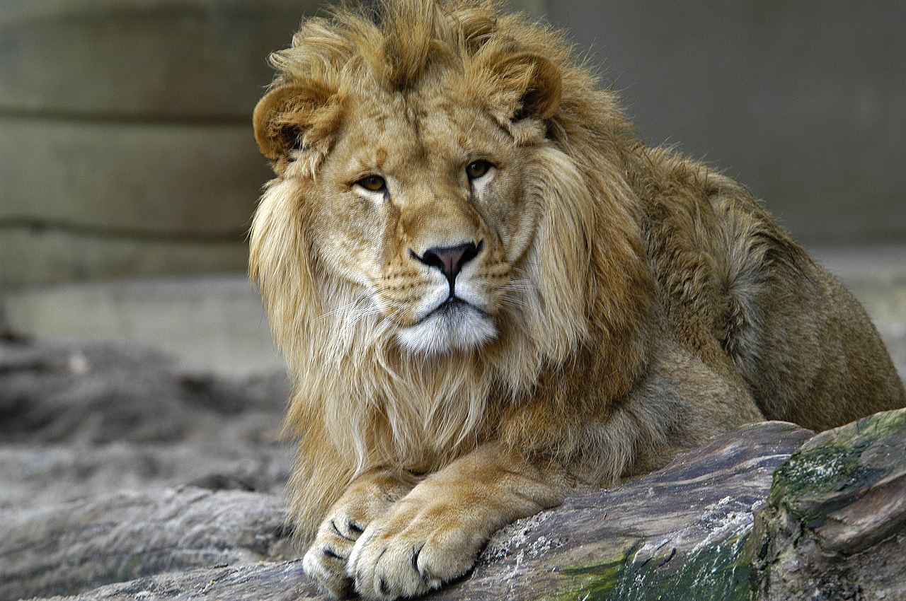 I Went to a Zoo | Recruiterpoet Blog